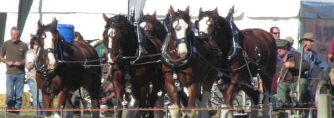 Horses - Plough